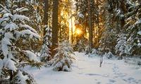 Под белым покрывалом января/часть 4