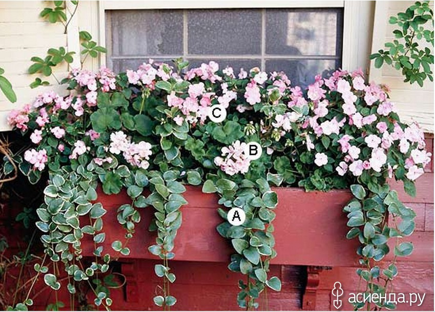 Garden design: flower box fresh ideas for window - fresh des.