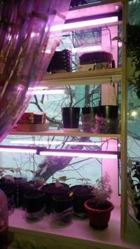 Стеллаж для растений с подсветкой