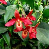 Любителям орхидей (фото)