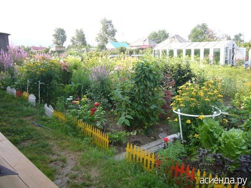 Моя любимая дача сад огород цветы видео