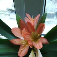 Мои комнатные цветы :)