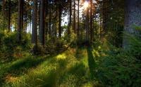 Лесные травы Северной Осетии. Часть 1