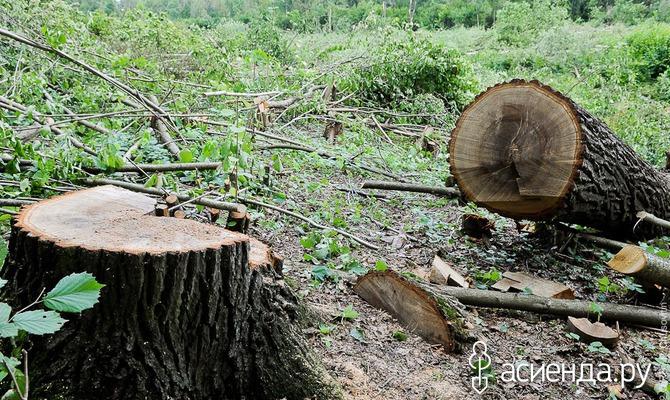 Как использовать древесные остатки на даче