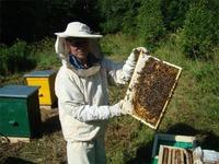 Пчелы и пасека