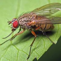 Поборем капустную муху