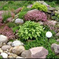 Защита альпийской горки от вредителей