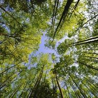 Биоэнергетика деревьев. Часть 1