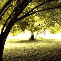 Биоэнергетика деревьев. Часть 2