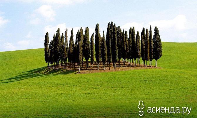 Биоэнергетика деревьев. Часть 3