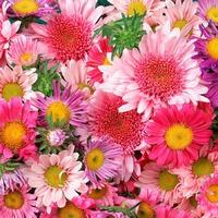 Гороскоп цветов. Часть 1