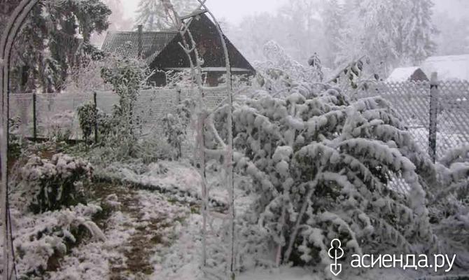 Снег на даче - польза и вред