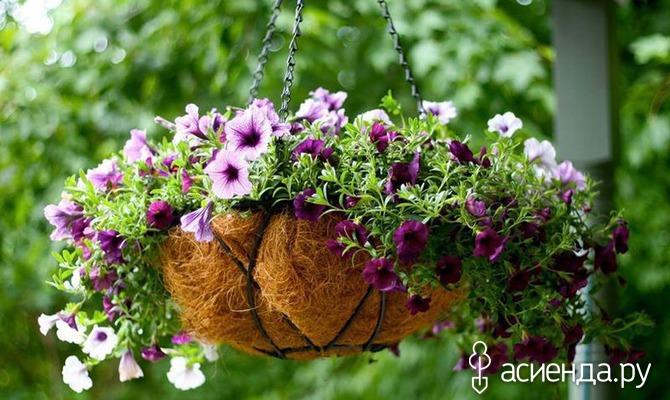 Подвесной сад как способ оформления дачи