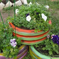 Цветы я тоже посадила, и эустому в том числе