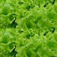 Зеленные культуры в огороде. Часть 1