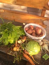 Сегодня собрала урожай!!!