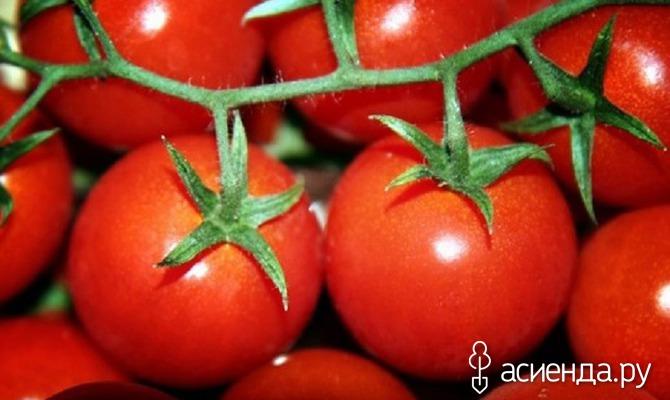 Предпочтения томатов