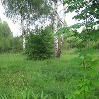 Природа и сад