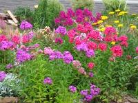 Сад непрерывного цветения. 19 июля.