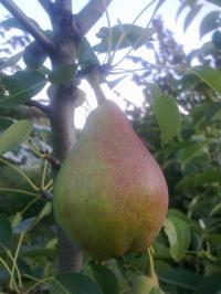 Орех Орехович, его дети, яблони и груши.