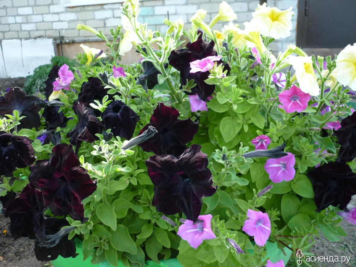 Саратов купить рассаду цветов оптом