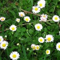 Травы от фурункулов. Часть 1