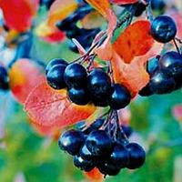 Травы от сахарного диабета. Часть 3