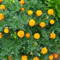 Цветы разные на 6 сотках