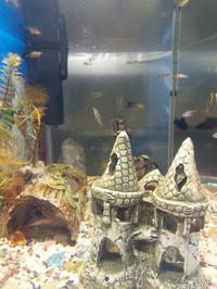 Хочу аквариум. Часть 2