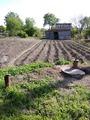 А как вы переходили на органическое земледелие?