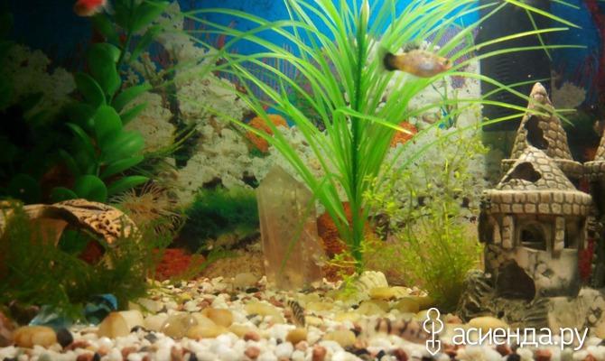 Хочу аквариум. Часть 1