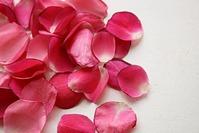 Наливка или ликер из розовых лепестков, подскажите пожалуйста))
