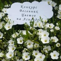 Цветочек-победитель в конкурсе весенних цветов