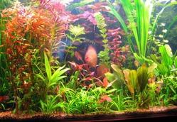Подводный сад дома