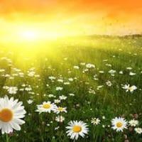 Июньская прогулка по огороду (часть 1)