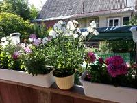 Можно ли подкармливать цветы сывороткой?