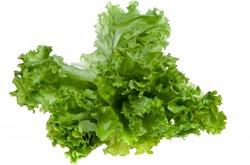 Ложная мучнистая роса салата