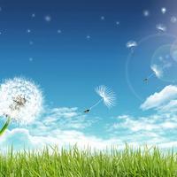 Июньская прогулка по огороду (часть 3)