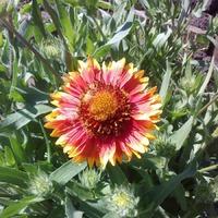Эксперимент с петуниями и садово-огородно-стро ительные работы