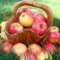 Стекловидность плодов яблони