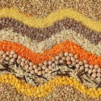 Просроченные семена