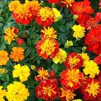 «Бархатный» садовый декор