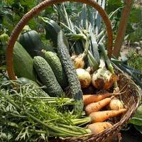Овощная корзина второй половины июня. Открытый грунт.