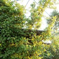 Опоры для вертикального озеленения.