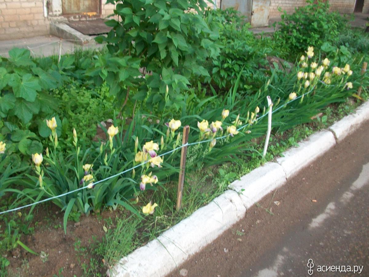 Простые клумбы цветы фото