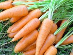 Бактериоз моркови