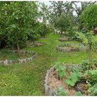 Газон в саду, огороде.