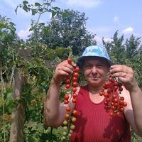 Томаты на верёвочках или высокорослые помидоры на шпалере в открытом грунте.