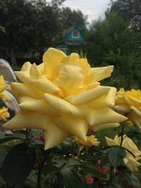 Долголетие, богатство, желтый цвет- сулит нам счастье