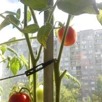 Огород на балконе, июнь 2015г